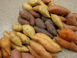 our varieties: mixed variety sweet potatoes - potato - recipes - recipe