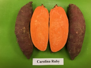 our varieties: carolina ruby