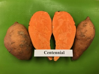 our varieties: Centennial