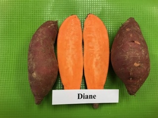 our varieties: Diane