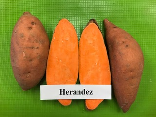 herandez sweet potato