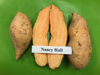 nancy hall sweet potato