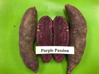 our varieties: Purple Passion