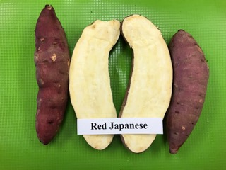 red japanese sweet potato