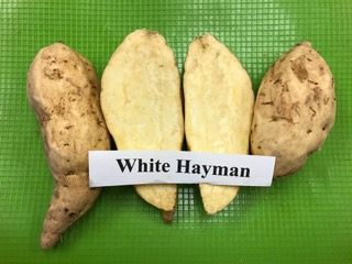 white hayman sweet potato