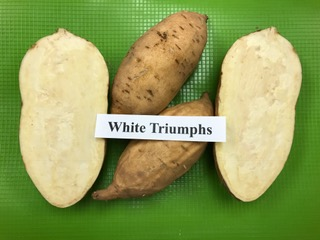 white triumphs sweet potato