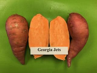 georgia jet sweet potato plants